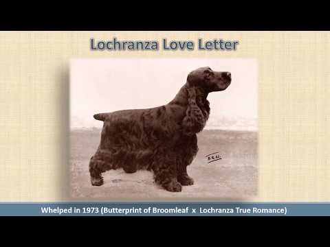 Breeders' Panel Discussion on Moderation in the English Cocker Spaniel