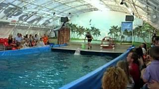 Плавучий дельфинарий (Ярославль, 2011)(, 2012-10-03T19:03:17.000Z)