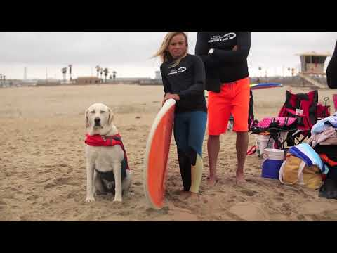 Meet Haole – Incredible Surf Dog – Purina® Pro Plan® Incredible Dog Challenge®