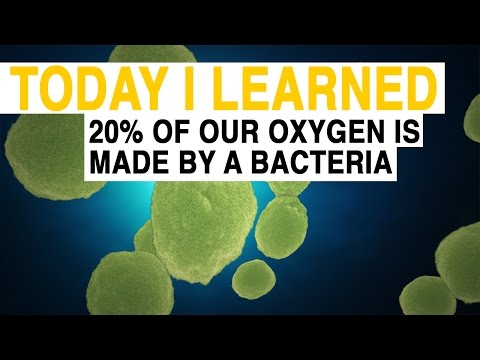 TIL: 20% of Our Oxygen Comes From a Bacteria | Today I Learned
