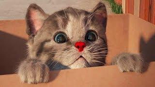 Little Kitten My Favorite Cat - Play Fun Kitten Pet Care Games For Children By Fox & Sheep