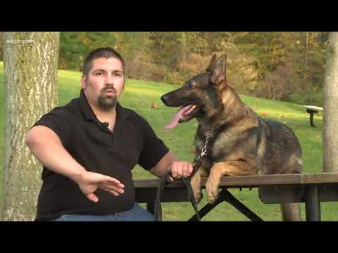 Cop Senses Something 'Odd' When K9 Partner Refuses To sit—Then He Is Given 2 Difficult Choices