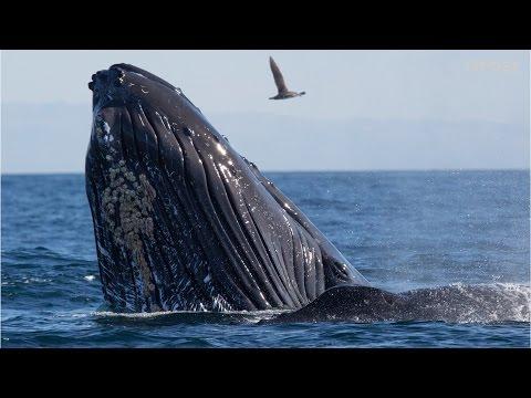 Las ballenas tienen acento regional, como las personas - 15 POST