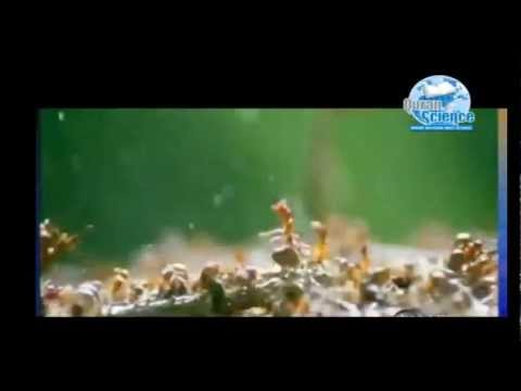 Quran Miracle, Talking Ants, Scientific Discovery in 2009, Proof that Quran is from Allah.mp4