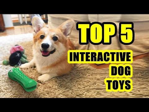 TOP 5: Best Interactive Dog Toy 2021 | Amazing Dog Toys