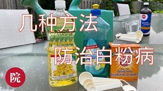 【彬彬有院】种•695防治白粉病的几种方法,你知道什么是标明为PMR的植株吗?