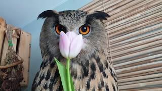 Весеннее на 8 марта! Дарите совушкам цветы! А лучше мышей.