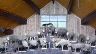 アグロドーム、ショーの最中の様子です。 牧羊犬は、ハンタウェイ。 賑...