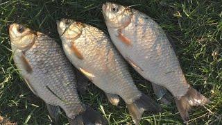 Секретное оружие для рыбалки)) или чем привадить карася?