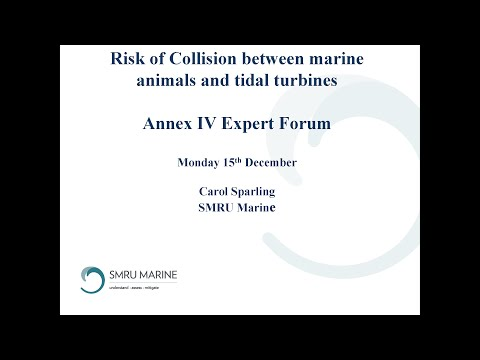 Expert Forum #2: Risk of Collision between Marine Animals and Tidal Turbines