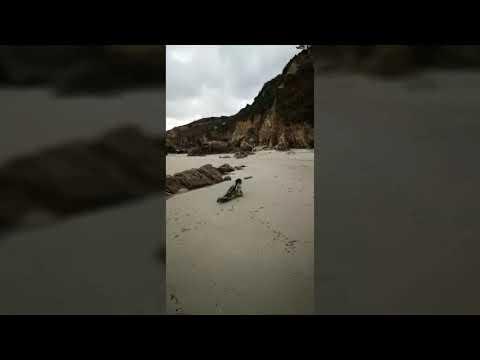 Aparece una cría de foca gris en la playa de O Perdouro
