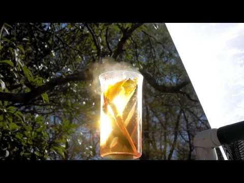 SOLAR FRESNEL LENS BOIL WATER LOQUAT TEA RESVERATROL