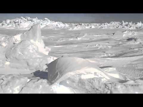 las-focas-pías.-en-el-mar-helado.