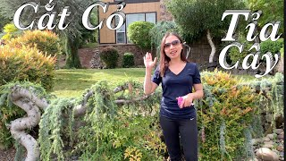 Cắt cỏ tỉa cây dọn dẹp vườn trước cùng Taylor - Taylor Recipes - Cuộc Sống Mỹ
