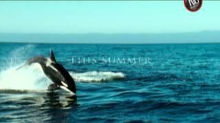 Arctic Tale - Trailer