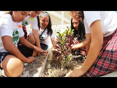 How We Children Save the Planet - Intro Video Plant-for-the-Planet