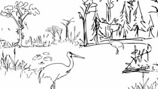 Conservation and the race to save biodiversity