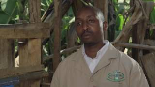 Shamba Shape Up Sn 07 - Ep 8 Dairy Farming, Milk Replacer, Energy Saving Jiko (Swahili)