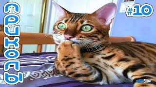 Приколы с Котами и Кошками 2019 | Смешные Коты и Кошки 2019 | Приколы с Животными #10