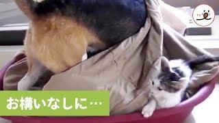 via YouTube@monksmood2 https://www.youtube.com/user/monksmood2/vide...