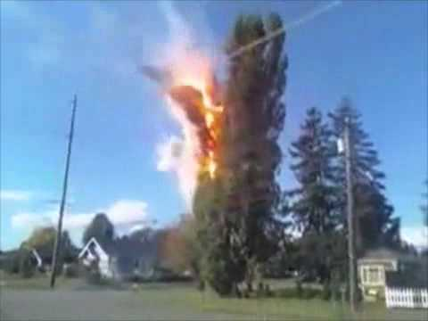 Tree catches itself on fire