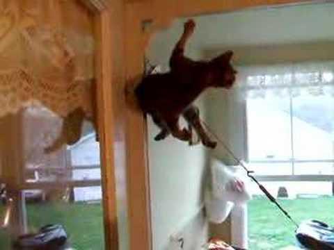 My Cat Doing A Magic Trick.