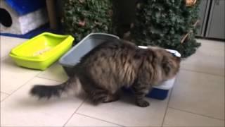Кошачий наполнитель ТМ Питомец