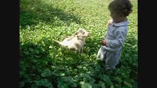"""Собачка укусила за пальчик (музыка - """"Собака бывает кусачей"""")"""