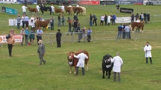Prif Bencampwriaeth Teirw Ifanc | Young Bull Championship