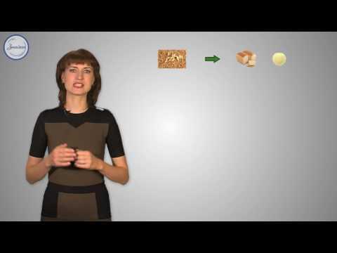 биология знакомство со злаковыми растениями
