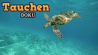 Tauchen Doku über Taucher, Unterwasser Dokumentation, Naturdokumentation, Tierdokumentation *HD*