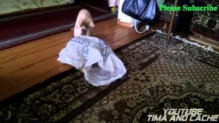 Кот Тима  - мой пакета / Tim Cote  - my package, funny cats