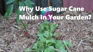 why use sugar cane mulch in your garden?
