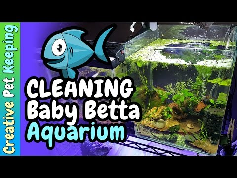 How to keep a fry tank clean 🐟 Baby Fish Tank