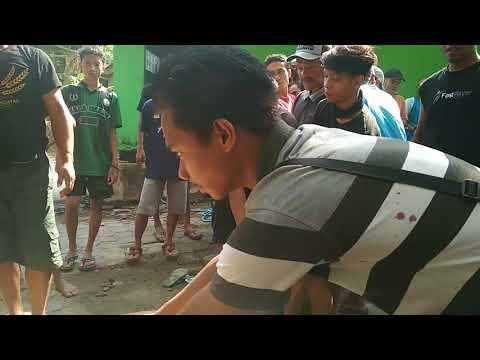 VIRAL Penyembelihan Hewan Kurban Pak Presiden Jokowi