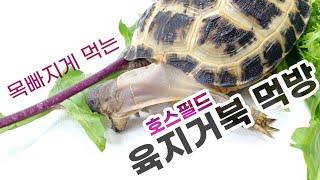 호스필드 육지거북 먹이 시간! 육지거북은 뭘 먹을까? …