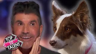 10 BRILLIANT Animal Auditions That AMAZED On Got Talent 2021!