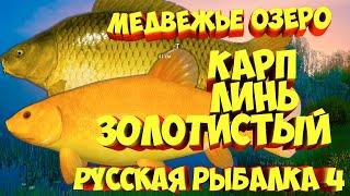 русская рыбалка 4 Карп Линь золотистый Медвежье озеро рр4 фарм Алексей Майоров russian fishing 4