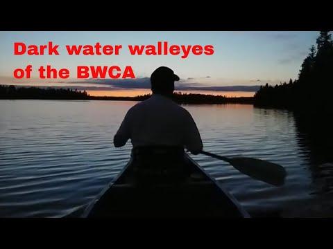Dark Water Walleyes Of The BWCA