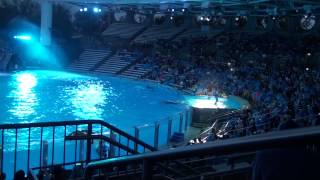 one ocean show at seaworld orlando