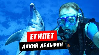 Египет Дикие дельфины Дайвинг в Красном море Прогулка на яхте Отдых Хургада 2020