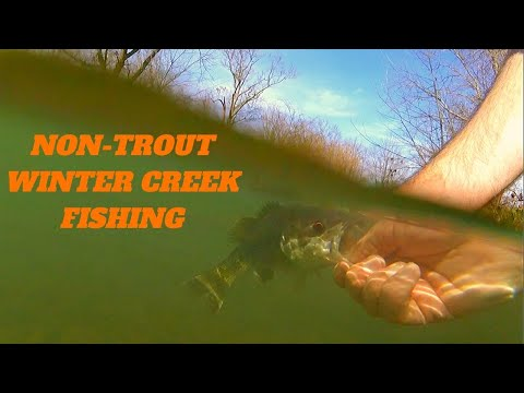 Creek Wading For Winter Time Sunfish And Bass
