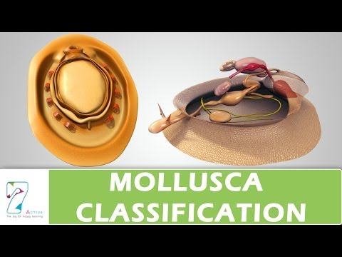 MOLLUSCA CLASSIFICATION