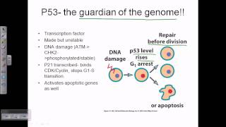 Mutation in tumor suppressor gene leads to cancer