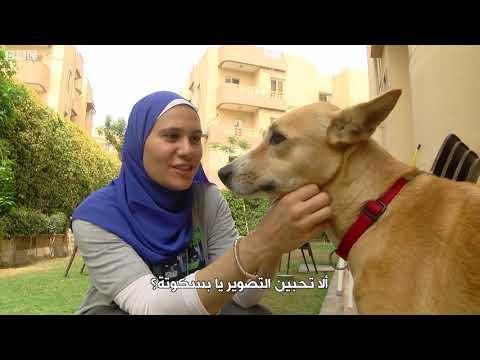الكلب البلدي المصري يتفوق على الأجنبي