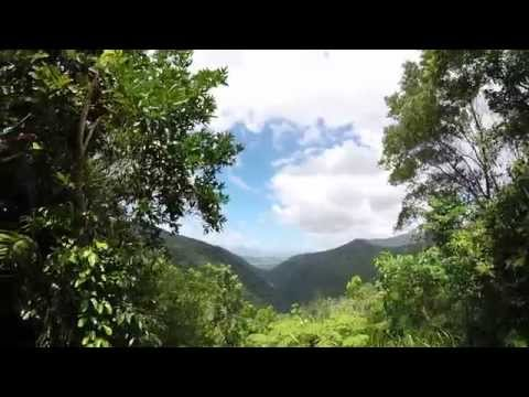 Exploring the Tropical Rainforests of Cairns