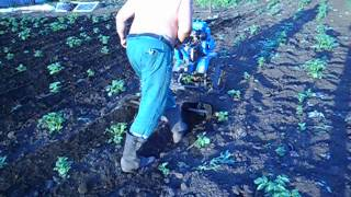Окучивание картофеля мотоблоком  Нева(, 2015-03-27T13:50:40.000Z)
