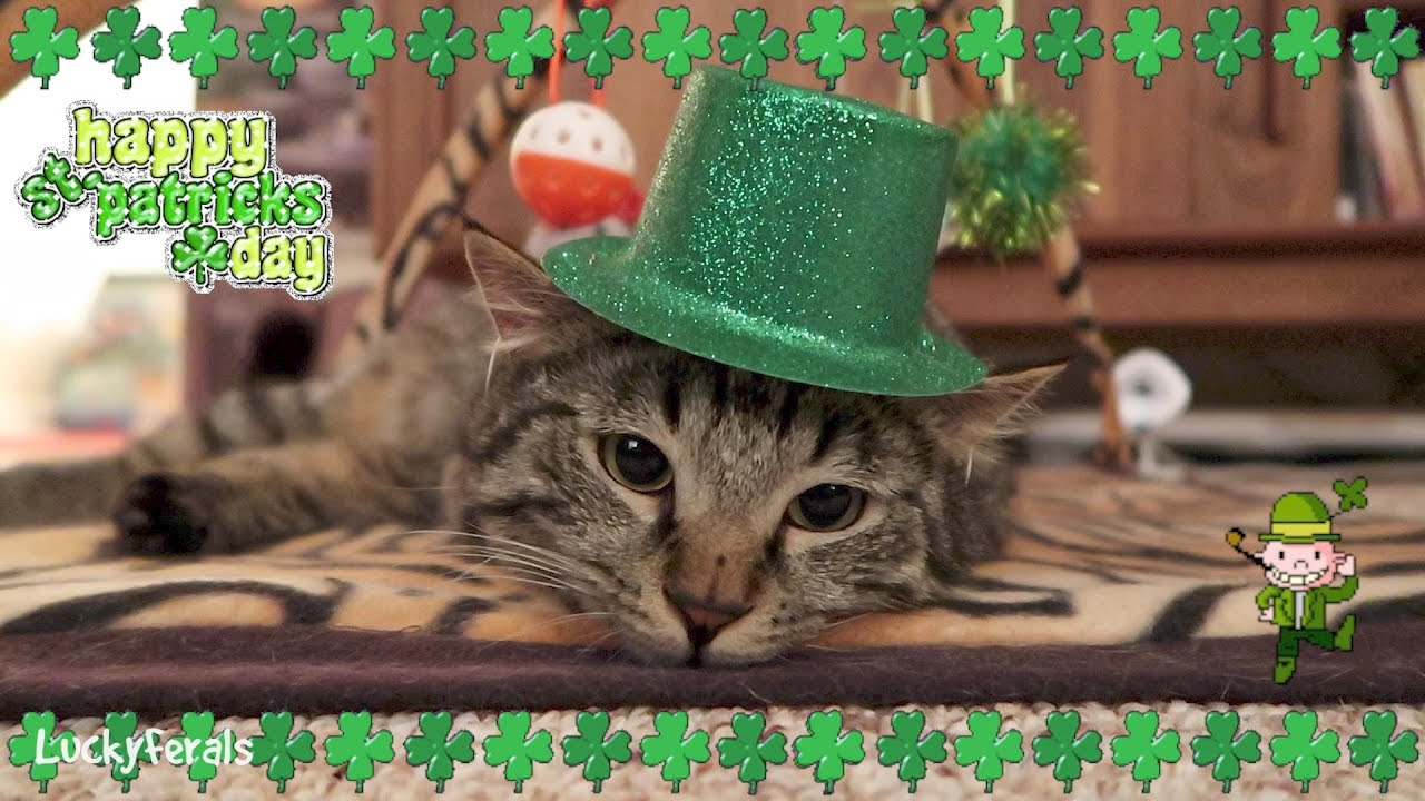 Lucky St Patricks Day Cat With Dancing Leprechaun YouTube