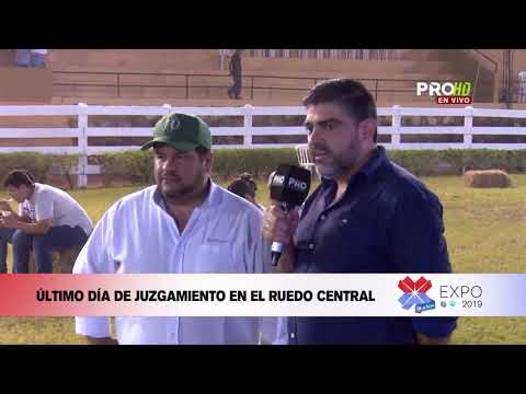 Expo 2019: Juzgamiento De Animales - Mario Pereira, Brahman
