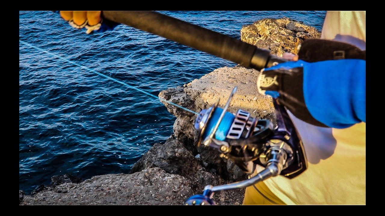 f58230cf0ec Saltiga dogfight 8000, big shark fishing Part 1 - Videos | Fishing from  around the world